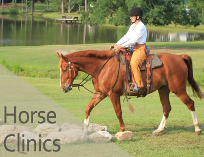 Horse Clinics at Reflections Farm